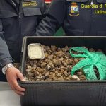 Tartufi di contrabbando dalla Romania destinati all'Umbria: sequestrato carico di 20 kg