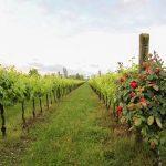Confagricoltura: l'agriturismo consolida la sua crescita in Friuli Venezia Giulia