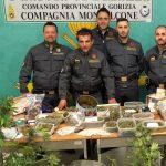 Scoperta dalla Finanza una coltivazione di cannabis. Coppia di cinquantenni arrestata