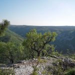 """Escursioni con """"Curiosi di Natura"""" a spasso per il Carso"""