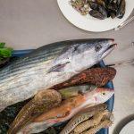 Slow Fish, focus sulla salute dei mari: specie a rischio a causa del consumo a senso unico