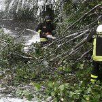 Violenti temporali e bufere di vento in Friuli. Albero su un'auto a Gorizia, tromba d'aria a Cividale