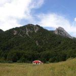 Maltempo: un morto per la caduta di un albero al raduno Famiglia Arcobaleno presso Tramonti