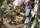 Preparatori d'Uva in finale al Wine Spectator Video Contest