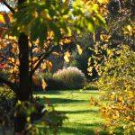 Gorizia Magica ci accompagna alla scoperta delle piante magiche e dei giardini fatati