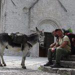 Trekking con gli asini in Friuli Venezia Giulia, nasce il progetto