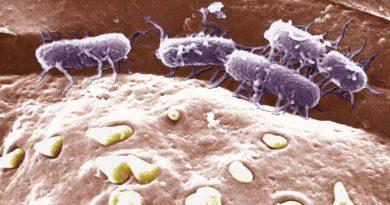 Quattro persone con febbre tifoide dopo aver partecipato al Rainbow Gathering di Tramonti
