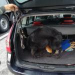 Giovani spacciatori fermati al valico di Sant'Andrea con un mix di sostanze illegali