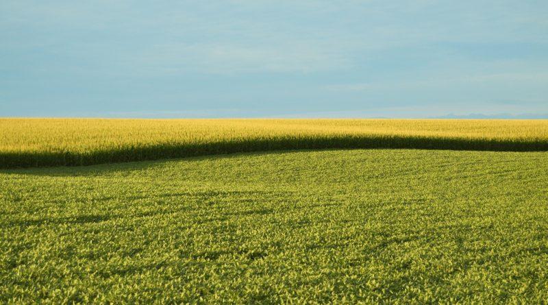 Studio dell'Università di Pisa sulle coltivazioni OGM: non ci sono evidenze di rischio per la salute