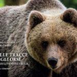 Sulle tracce degli orsi in Friuli Venezia Giulia: si presenta il libro che raccoglie foto e ricerche sul campo