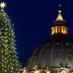 Il Friuli Occidentale dona l'albero di Natale che sarà allestito a piazza San Pietro per le festività 2018