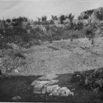 Grande Guerra: gli alberi simbolo di San Martino del Carso in mostra