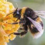 Shock anafilattico provocato da punture da api, vespe e calabroni: prevenzione e cura in regione