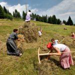 """Domenica 29 luglio: in Carnia a Sutrio si ritorna al passato con """"Fasjn la mede"""""""