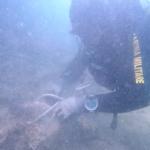 300 chili di tritolo della seconda guerra mondiale scomparsi nel mare di Grado