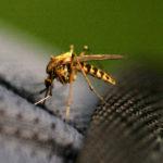 Tavagnacco, torna da un viaggio all'estero con la febbre Dengue: ordinata disinfestazione