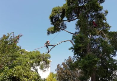 """Fine settimana dedicato agli alberi alla manifestazione """"Nel Giardino del Doge Manin"""""""