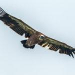 Vivi e liberi di volare: alla Riserva Regionale Naturale del Lago di Cornino giornata sui rapaci