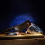 Ambrosia: collettiva fotografica al museo d'Arte Contemporanea Ugo Carà a Muggia
