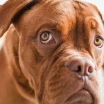 Leishmaniosi: come difendere i cani dai pappataci