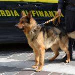 L'attività della Guardia di Finanza del Friuli Venezia Giulia illustrata in occasione dell'anniversario del Corpo