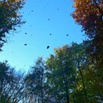 Vento da Nord Ovest in montagna, le forti raffiche provocano cadute di alberi