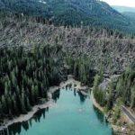 Maltempo, distrutti in montagna circa 14 milioni di alberi. Coldiretti: danno ambientale immenso