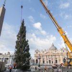 L'albero del Friuli Venezia Giulia in piazza San Pietro si illumina il 7 dicembre