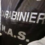 I carabinieri del NAS sequestrano 300 ettolitri di vino per sospetta frode alle norme Dop e Igp