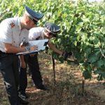 Confagricoltura: le infiltrazioni della criminalità organizzata nell'economia agricola