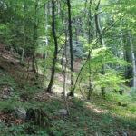 Anziano trovato privo di vita in un bosco in Val d'Arzino