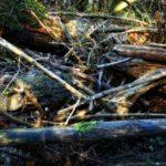 Convegno di Legambiente sulla tempesta Vaia: quale futuro per i nostri boschi?