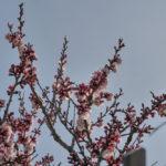 Alberi in fiore, ortaggi fuori stagione: allarme di Coldiretti per le alte temperature