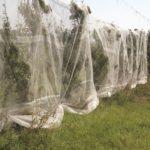 Legge sul sostegno alle aziende agricole, resta fuori la lotta alla cimice asiatica