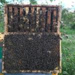 Giornata mondiale delle api: parlano gli apicoltori del Friuli Venezia Giulia