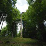 Il riscaldamento globale nel Cansiglio cambia gli equilibri del bosco. Fotogallery
