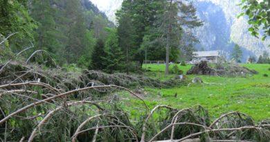 Tempesta Vaia: risparmi e fondi non utilizzati finanziano ulteriori 75 cantieri in 44 comuni