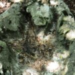 Escursione all'orma di dinosauro a Mezzomonte: appello per non rimuoverla