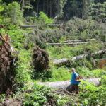 Nuovo bando da oltre 3 milioni di euro per il ripristino dei boschi devastati da Vaia