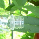 Cimice asiatica: Ersa Fvg aderisce al progetto di lotta biologica con un insetto antagonista