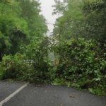Il maltempo imperversa sul Friuli Venezia Giulia: allagamenti, black out e alberi caduti