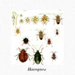 Buttrio invasa da insetti simili a piccole cimici. Il comune prende provvedimenti
