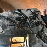 Bruno, il più grande dinosauro quasi completo mai ritrovato in Italia, in mostra al castello di Duino