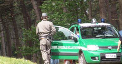 Scoperto grosso giro di bracconaggio di uccelli. 11 persone coinvolte, oltre 300 esemplari sequestrati