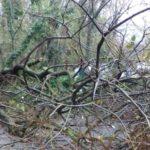 Allerta regionale per vento forte. Si segnalano alberi abbattuti