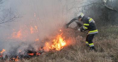 Incendio con fronte di 10 chilometri sulla ferrovia nel Carso triestino. Le foto