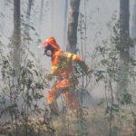 Insidioso incendio sul Carso triestino: pericolo elevato a causa della lunga siccità. Le foto