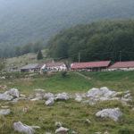 Coldiretti: la filiera del latte essenziale per l'economia italiana. Smentito inquinamento da allevamenti