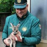 A maggio i nuovi nati, la raccomandazione delle guardie venatorie: i cuccioli non vanno toccati