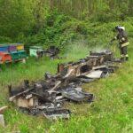 Incresciosi atti vandalici a San Lorenzo Isontino: bruciati alveari e sversati rifiuti nel bosco